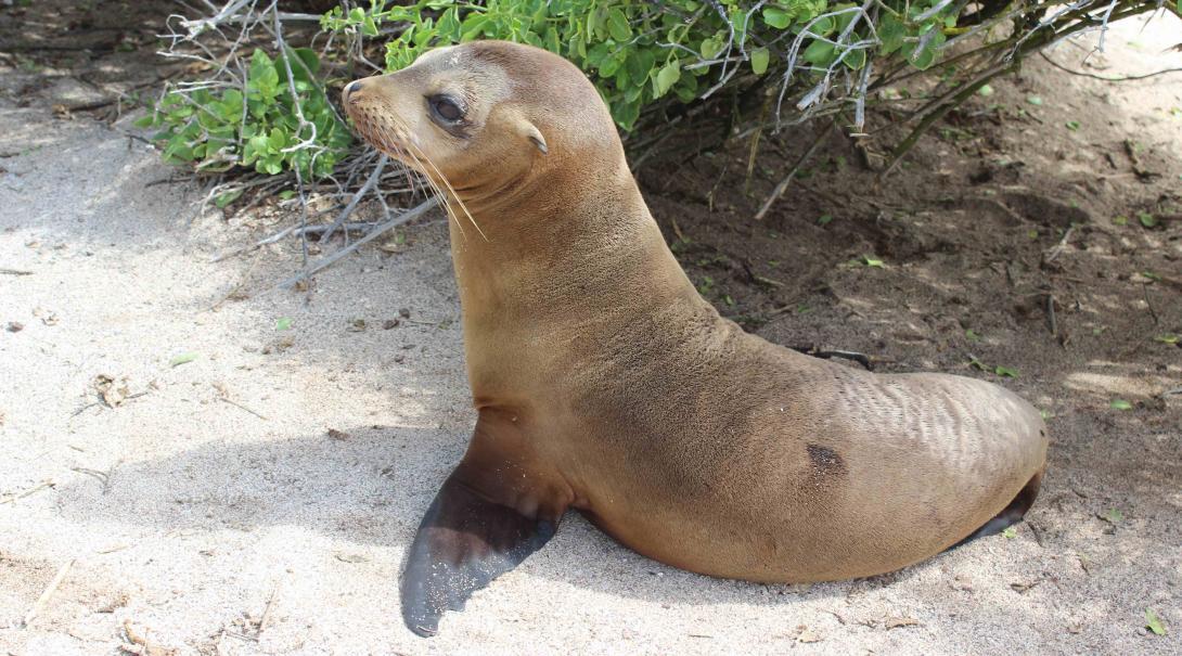 Leones marinos en la playa de las Islas Galápagos.